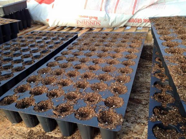 20110311 Seeding (2)
