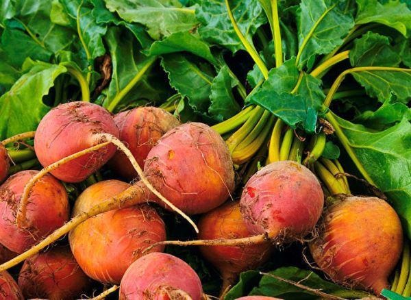 golden-beets