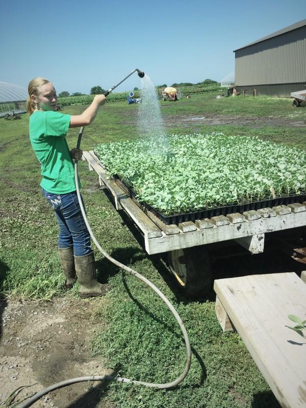 July Watering
